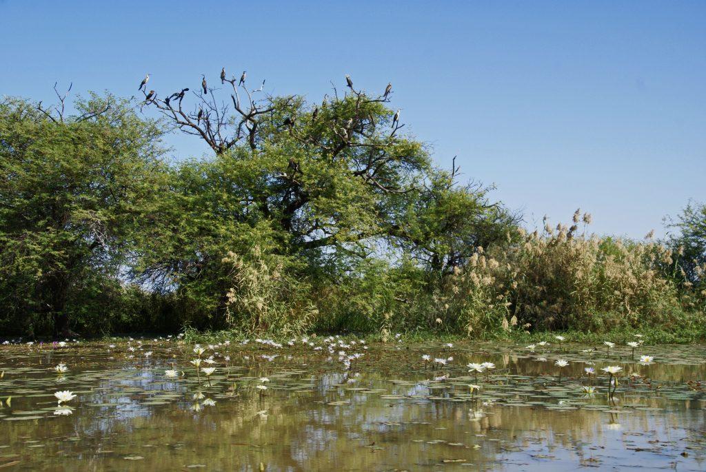 Parc National des Oiseaux du Djoudj, Senegal